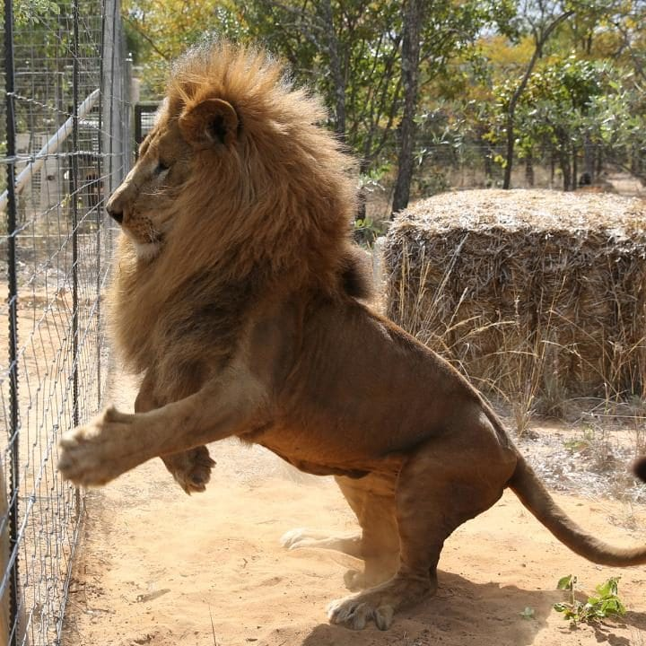 Lion Sanctuary